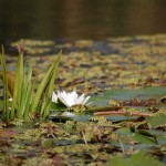 danube delta biosphere reserve romania