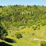 hartibaciu plateau romania