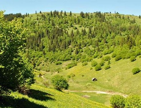 Hartibaciu Plateau is a gorgeous area in central Romania