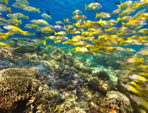 New Caledonia coral reef is the second largest reef in the world