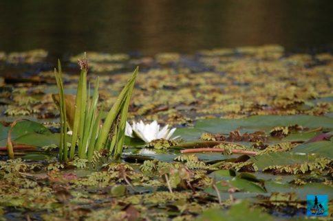 Danube Delta Biosphere Reserve is Romania's no. 1 attraction