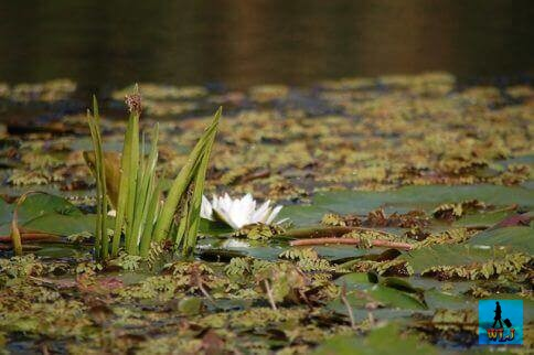 Danube Delta's flora is rich and spectacular