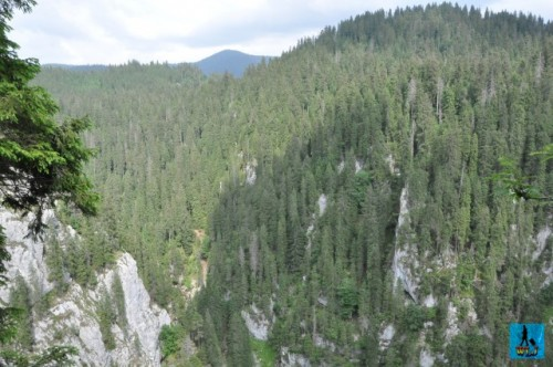 Endless coniferous forests hiding a rich fauna, are everywhere in Apuseni Natural Park