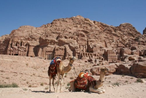 Make a ride on a camel to see Petra in a different way